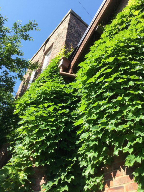 新緑と煉瓦積み